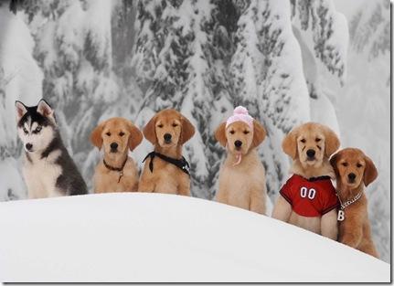 snow_buddies_still